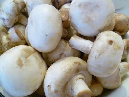 грибы шампиньоны